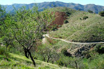 Tour Roadie Fuente La Reina 02 360x240, Sun Bikes